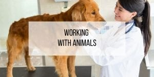 So You Want to Work with Animals?