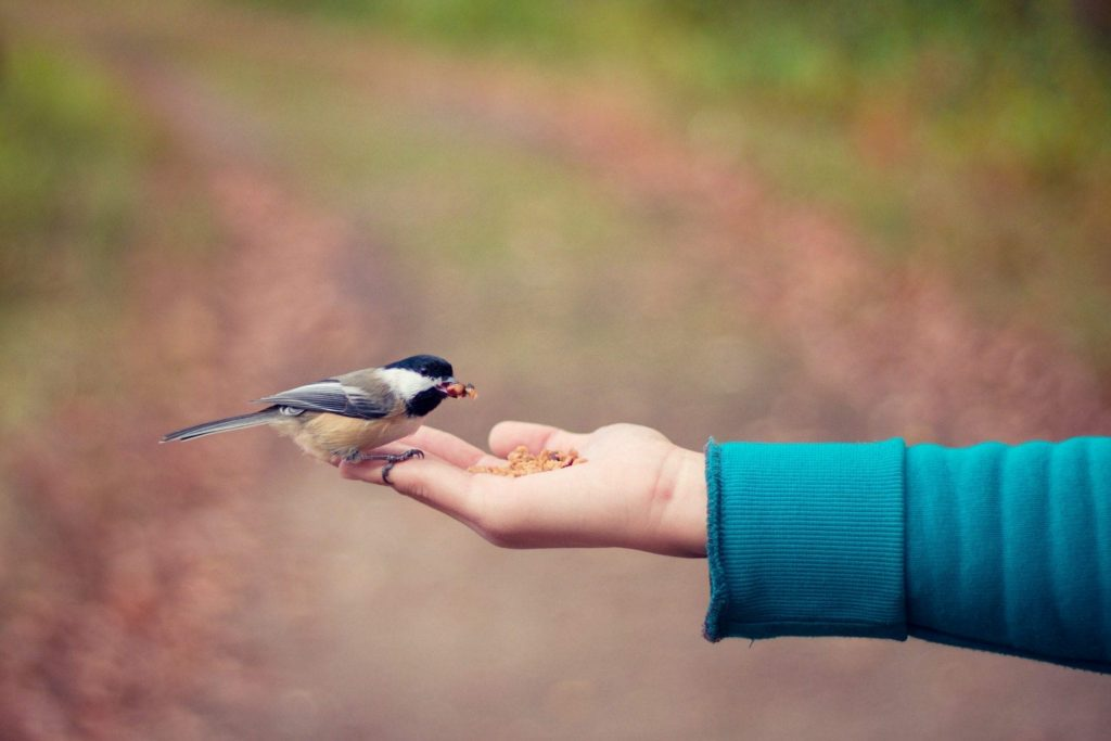 woman feeding little bird from her palm as a gesture of caring